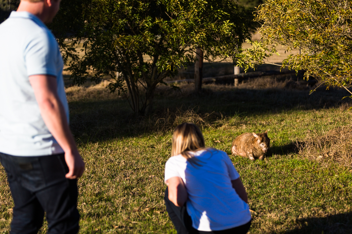 004_little wombat found by newly engaged couple in wollombi